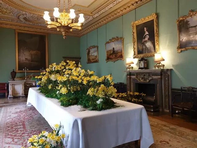 festival of daffodils in Wimpole house dining room