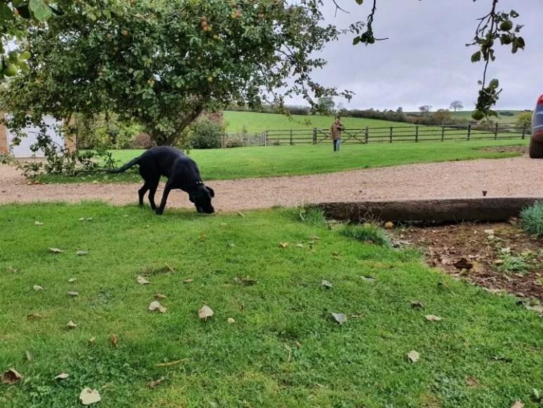 end of a dog walk enjoying the garden