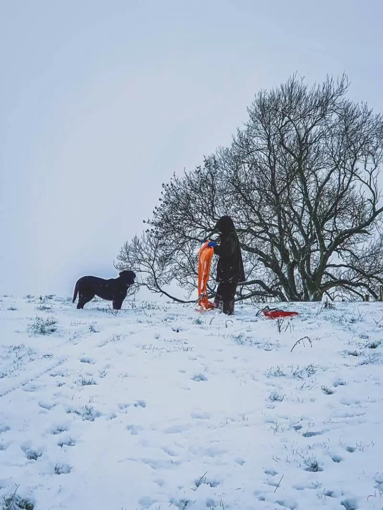 boy at top of snowy slope with black dog about to put the orange sledge down tree in distance