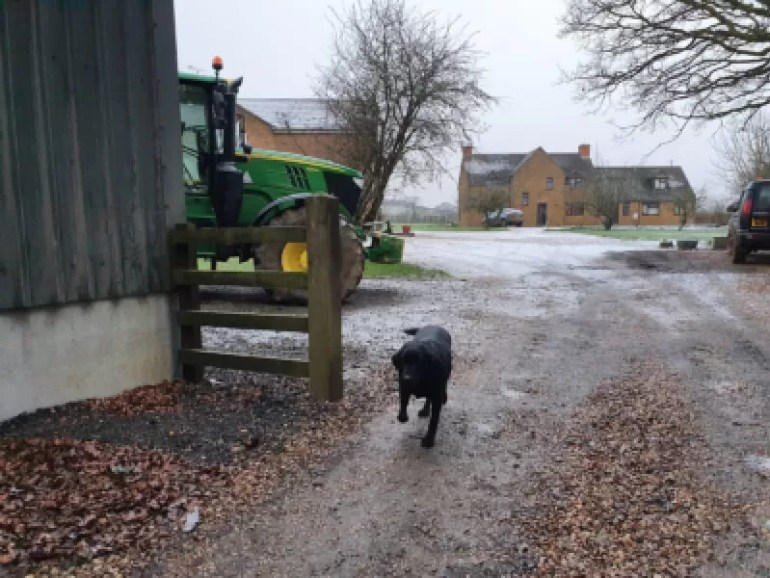 walking up the farm drive with john deere tractor, black labrador coming towards me.