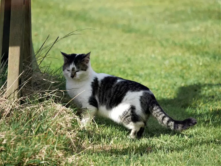 farm cat on the prowl in a garden