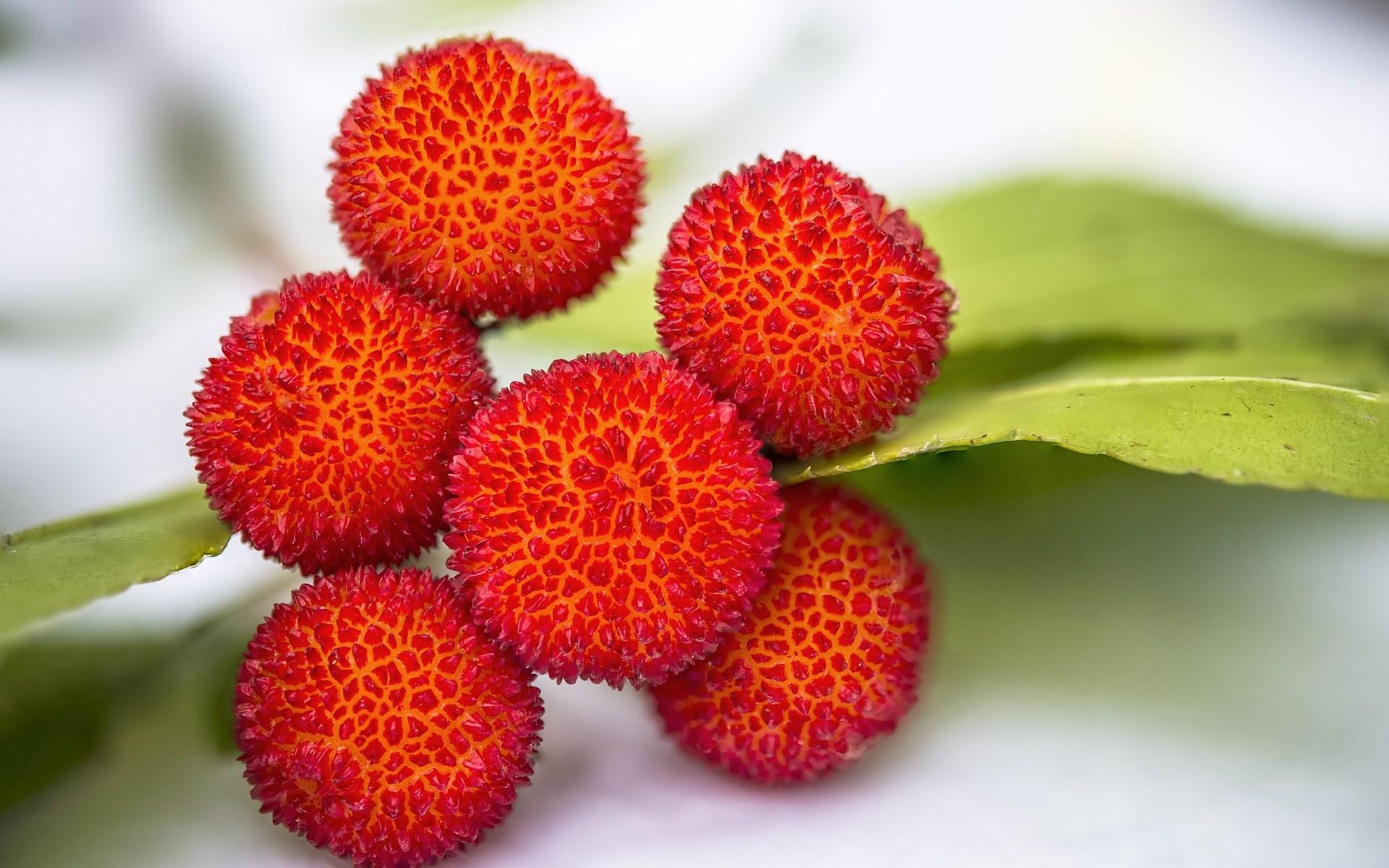 6 fruits arbousier rouges