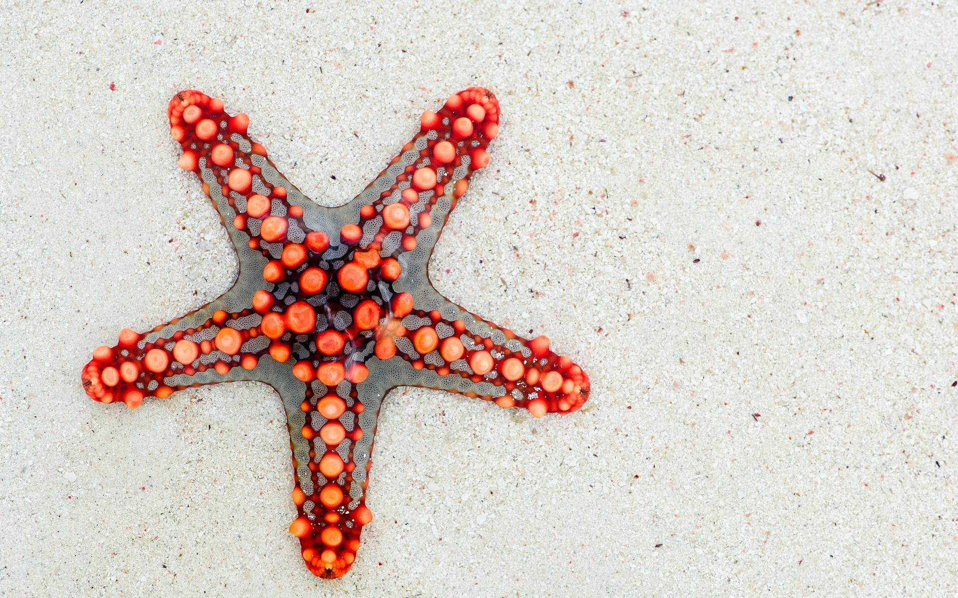 étoile de mer, Zanzibar, sable blanc