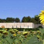 Wijnproducent Paul Mas ontvangt High Environmental Value certificaat