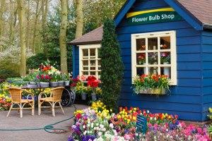 flower-bulb-shop