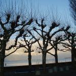 """galeria Basi do konkursu """"Twoje drzewo"""" Marii Bucardi"""