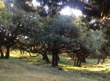 XIX Rytual dla Matki Ziemi z Maria Bucardi
