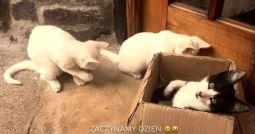 kotki w oazie