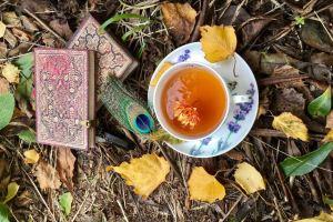 Jesień w Magicznej Oazie