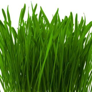 Superalimente. Pirul – Planta medicinala, tonica, detoxifianta sau doar un suc de iarba?