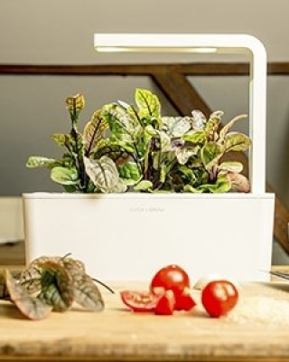 click and grow herb growing kit