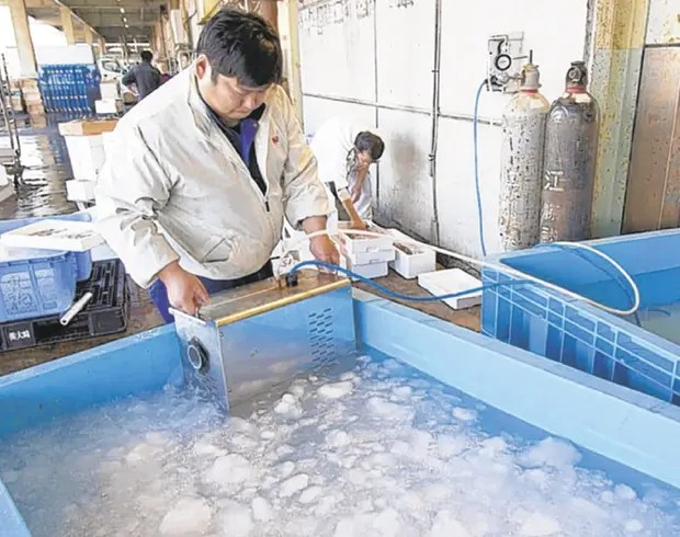La firma de frutos de mar Marufuku Suisan usa burbujas en su estanque de peces.