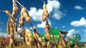 La producción podría bajar en 2,5 millones de toneladas, a 52 millones, según la Bolsa de Comercio de Rosario