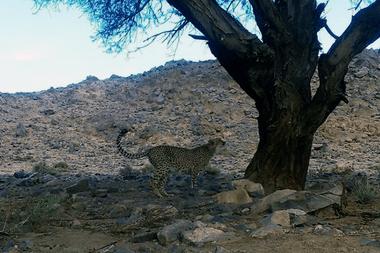 El momento del video en el que el felino intenta trepar al árbol