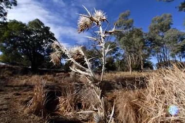 La sequía preocupa a los agricultores y ganaderos del estado australiano de Nueva Gales del Sur