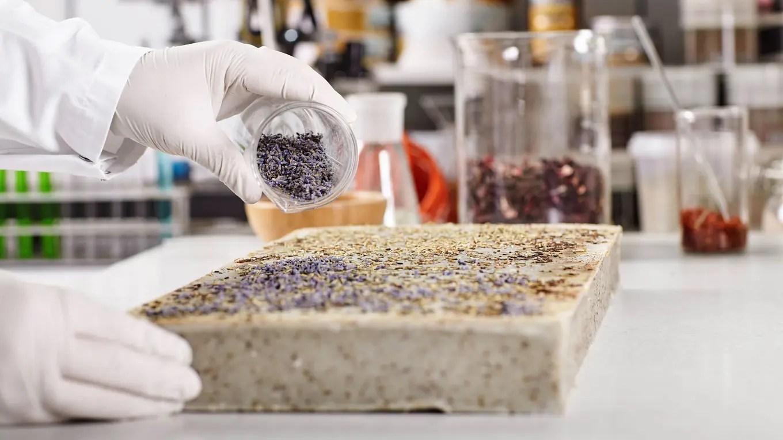 Se estudian las vinculaciones entre los fertilizantes y los bioestimulantes Shutterstock