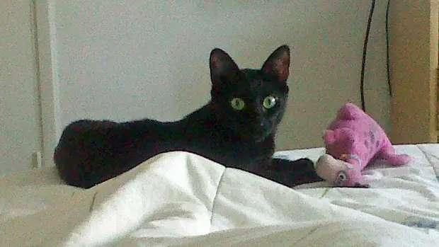 Minerva al pie de la cama, siempre junto a Karina