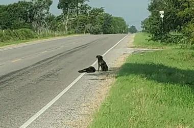 Los dos perros estaban a la vera de una ruta rural desierta en el condado de Lkeberg, en Texas, Estados Unidos