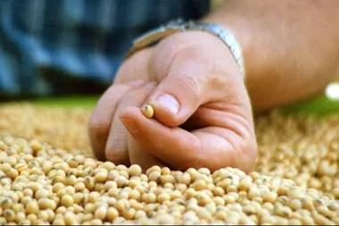El día en que subieron del 30% al 31,5% las retenciones a las exportaciones de porotos de soja, la liquidación de divisas aumentó 27%. Esto es porque el decreto que lo dispuso estuvo mal redactado.