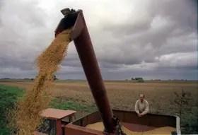 Fuerte suba de las exportaciones de granos