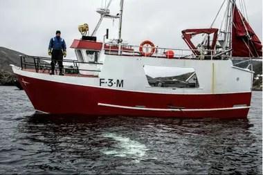 Pescadores noruegos observan una ballena beluga nadando debajo de su barco