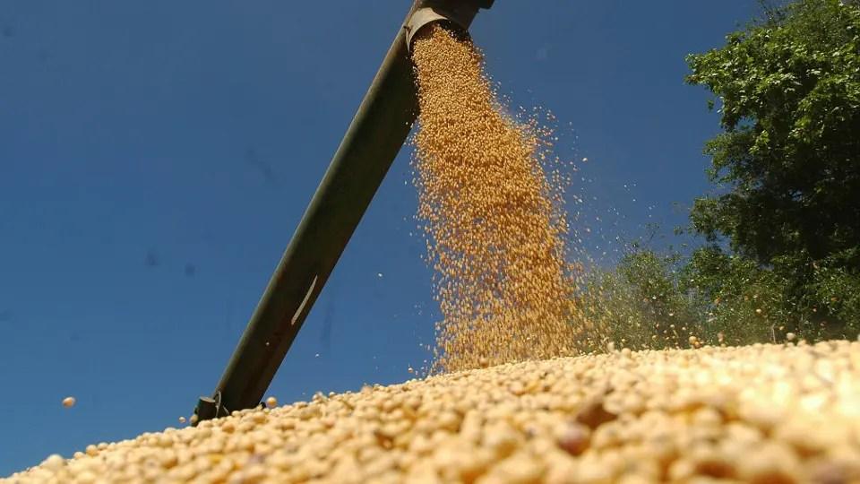 Con mayor actividad en el mercado local, la semana fue positiva para la soja foto: Archivo MARIO GARCIA