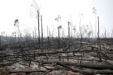 Troncos quemados en una zona afectada por los incendios en la Amazonia