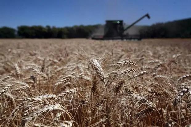 A fines de mes comenzará la recolección del trigo de invierno en EE.UU.