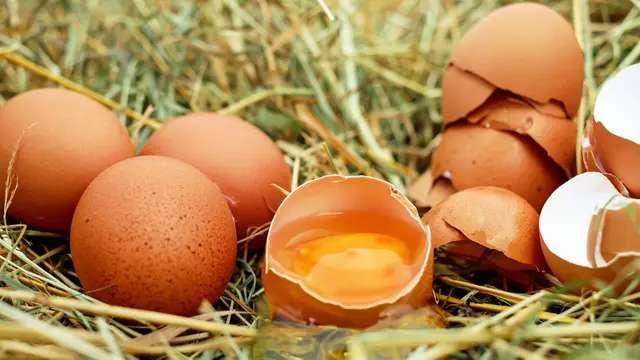 ¿Cómo influye el huevo en la dieta?