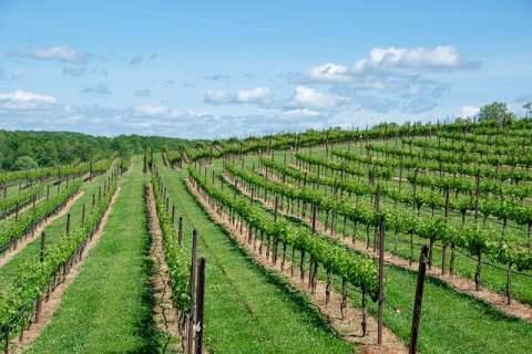 winerybybicycle-bucketlisttraveladvisors.com