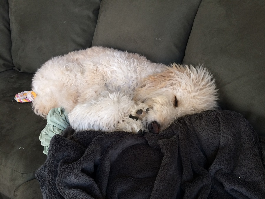 tater napping