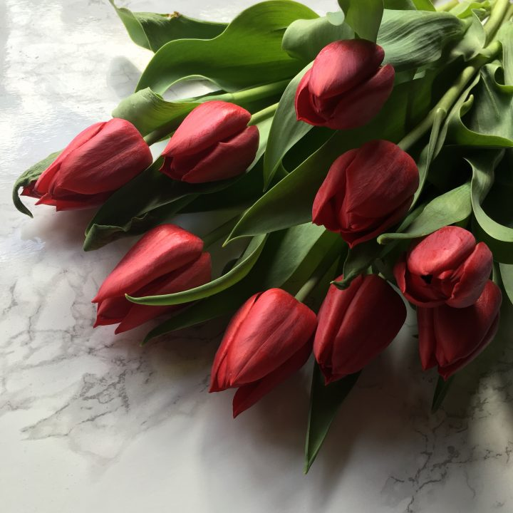 tulips flowers red
