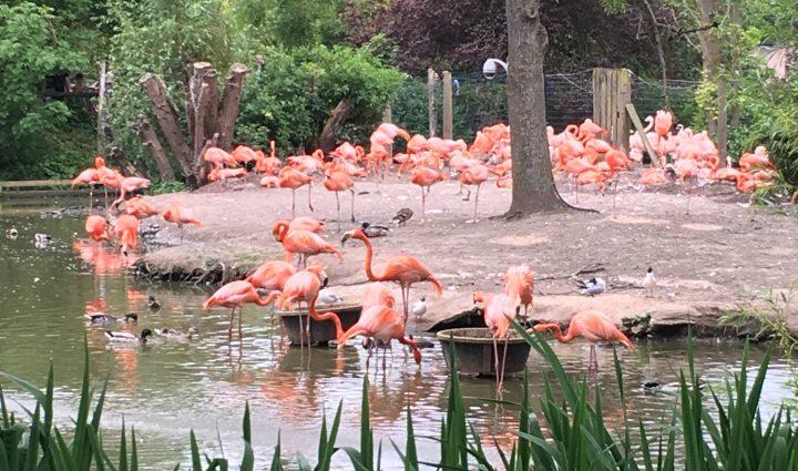 Chester Zoo weekend away UK flamingos