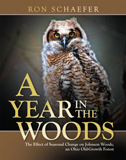 Book cover A Year in the Woods