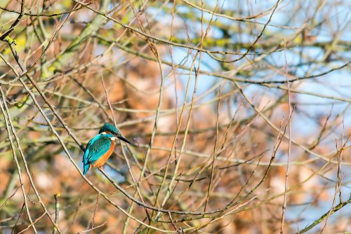 Kingfisher-Manor-Farm