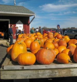 Pumpkins at Trauger's Farm Market; photo by L. Goldman