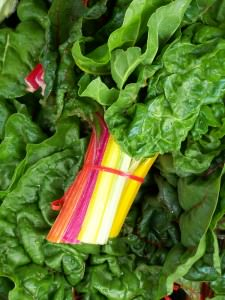 Rainbow Swiss Chard; photo by L. Goldman