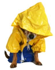 Dog in rain slicker