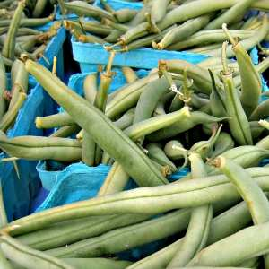 Green beans from Blooming Glen Farm; photo credit Lynne Goldman