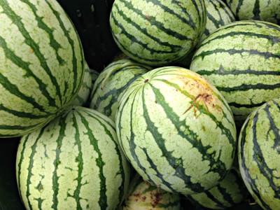 Yellow watermelon from Blooming Glen Farm. Photo credit: Lynne Goldman