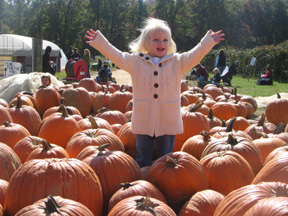 Child in Pumpkins at Terhune Orchards