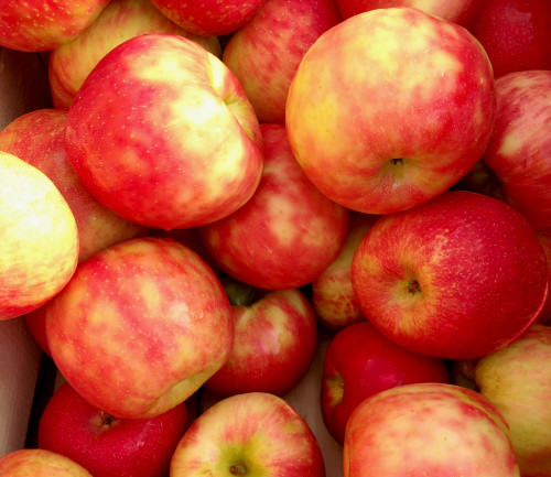Honey crisp apples from Solebury Orchards_Oct 2014; photo credit Lynne Goldman
