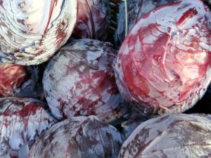 Cabbage BGF_300x225