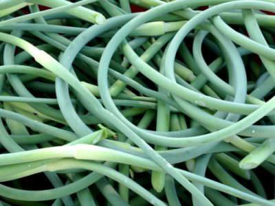Garlic scapes; photo L. Goldman