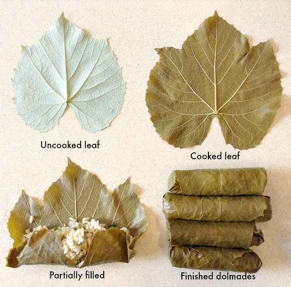 grape leaves from start to finish; photo credit Wendy Yurgosky