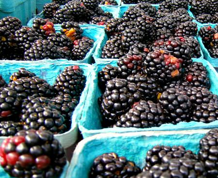 Blackberries_Shady Brook_photo credit L. Goldman