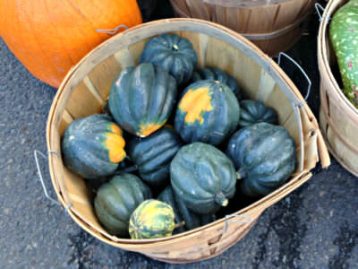 Acorn squash; photo Lynne Goldman