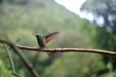 Hummingbird, Roger Burkhard