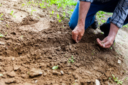 Man planting a seed