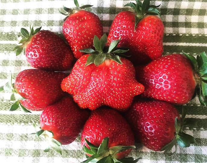 Rolling Hills Farm strawberries